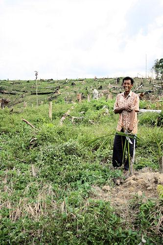 Die Kleinbauern in Tanjung Mandiri bauen heute ihren Reis dort an, wo ein Unternehmen zuvor abholzte.