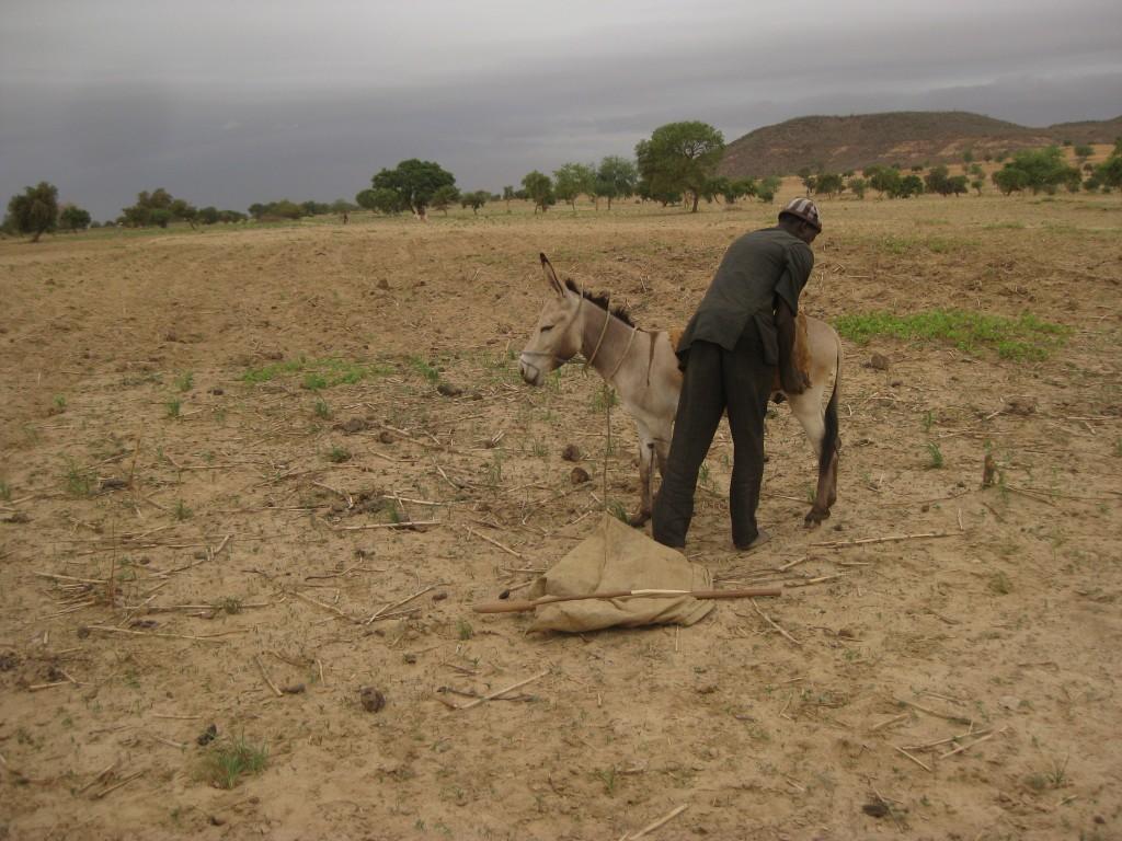 Ibro und sein Esel
