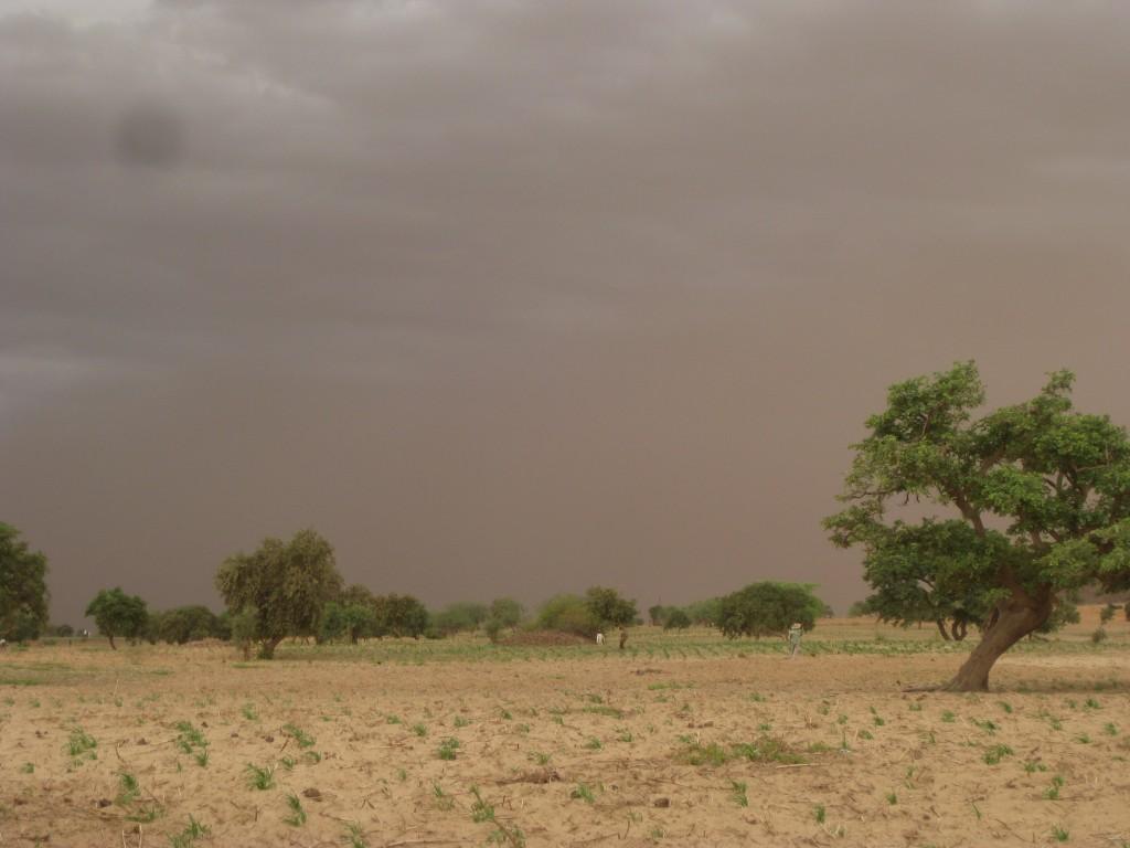 Dürre in der Sahelzone