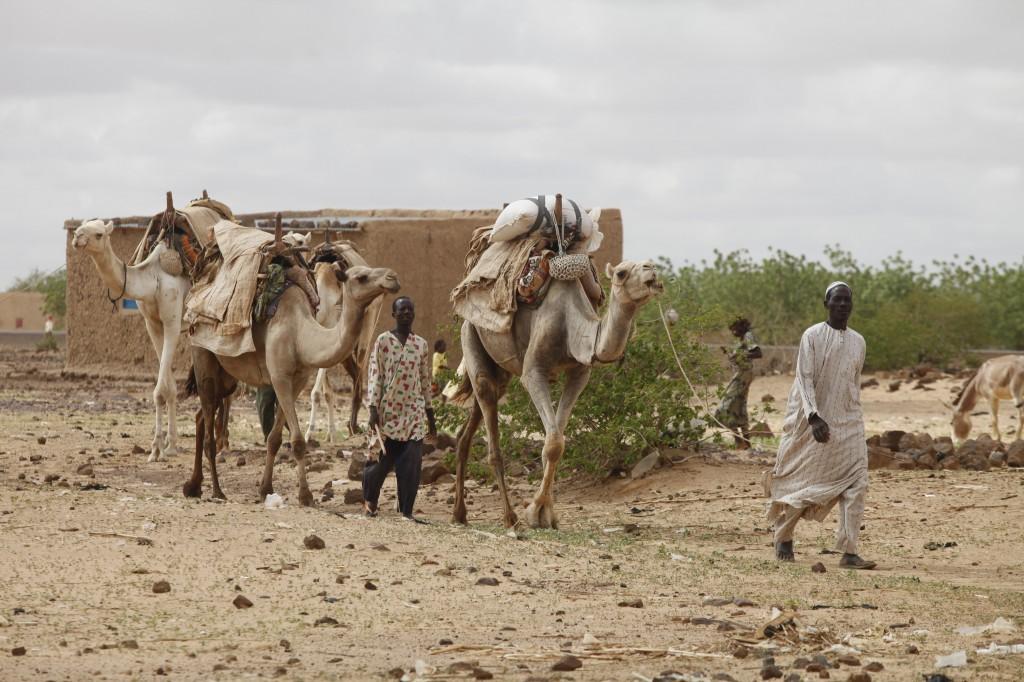 Händler mit bepackten Kamelen auf dem WEg zum Markttag © Schwarzbach/MISEREOR