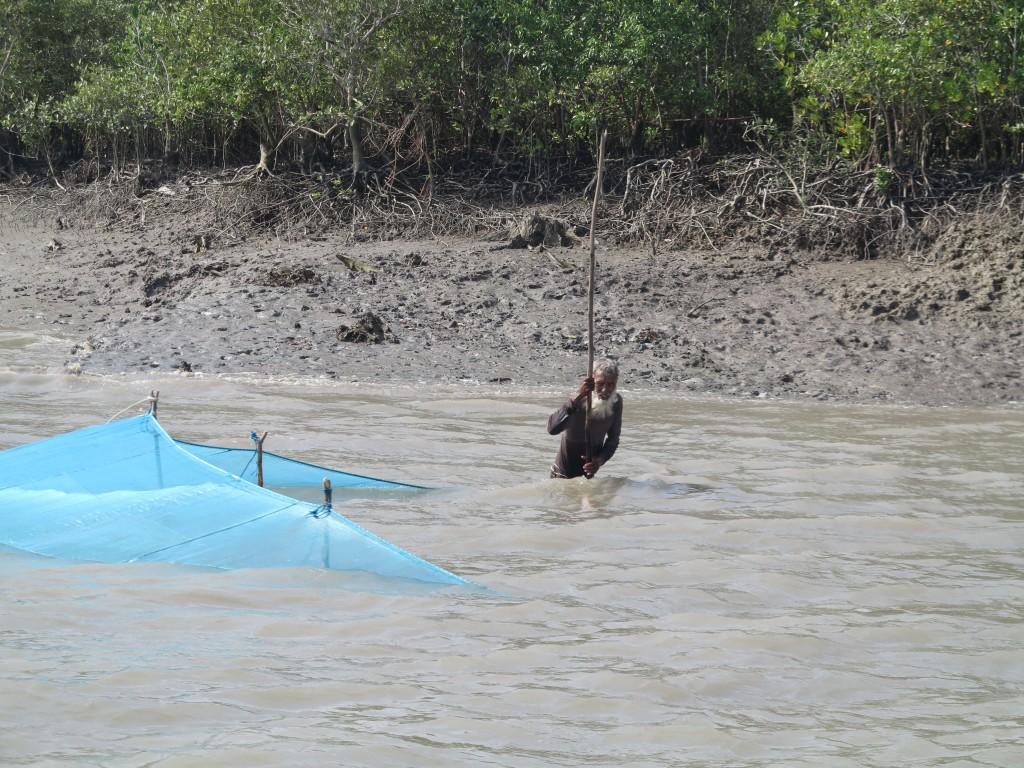 Königstiger sind eine tödliche Gefahr für die Fischer.