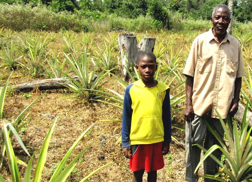 Ein liberianischer Bauer auf seinem Ananas-Feld
