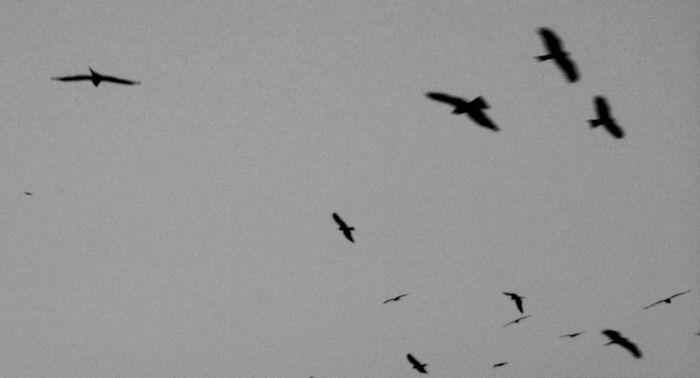 Freiheit bedeutet auch ein freier Blick in den Himmel.