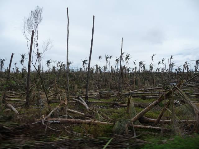Wir hoffen einen Beitrag dazu leisten zu können, dass die Menschen Schritte hin zu einem eigenständigen Leben unternehmen können, zum Beispiel durch das Wiederanlegen von Palmenhainen.