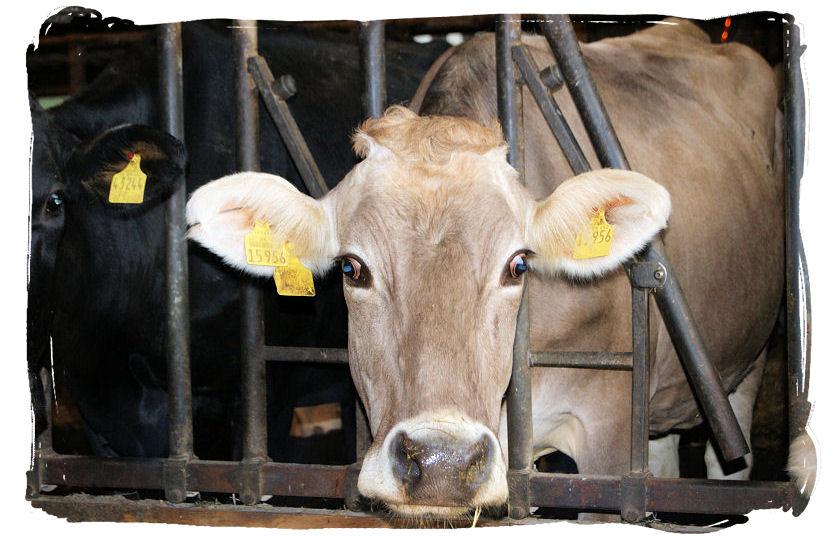 Milch reist nicht gern - Besuch von Milchbauern aus Burkina Faso 3