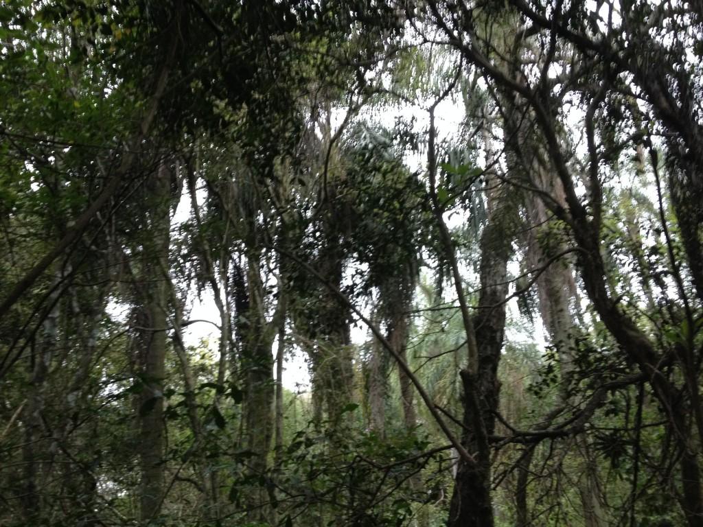 Reinstes Dschungel-Feeling :)