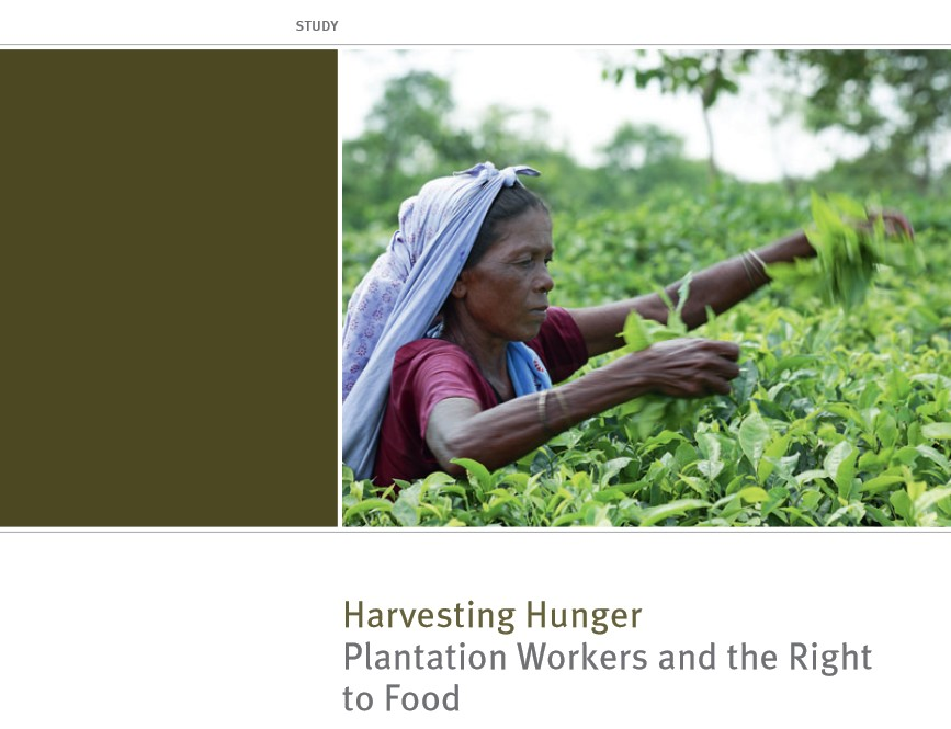 Titelbild - Studie - Harvesting Hunger - Plantation Workers and the Right to Food