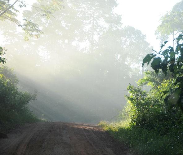 Auf dem Weg durch Amazonien: Eine Straße durch den Regenwald. Foto: Ursula Meissner/MISEREOR