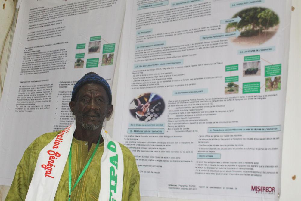 Erfindung aus dem Senega: Mangobäume werden in Gigi gepflanzt