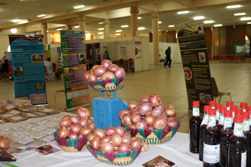Zwiebelproduktion vorgestellt auf der FIPAO