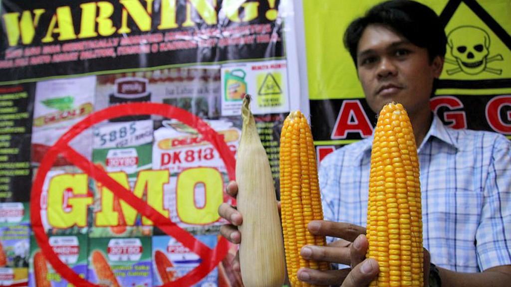 1-GMO-Corn