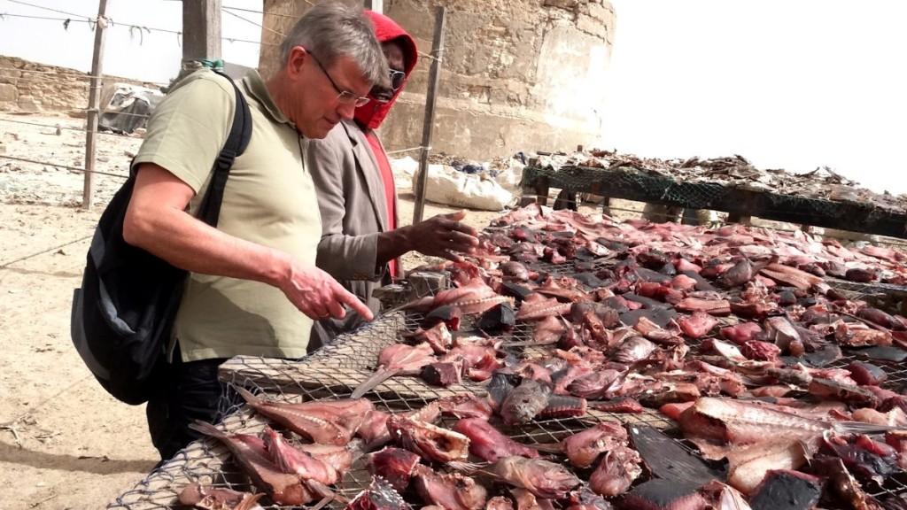 Fischtrocknung in Nouadhibou, Foto: Jonas Wipfler