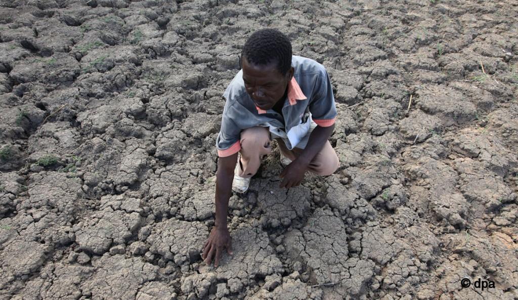 Ein Großteil der Ernte fiel der extremen Trockenheit zum Opfer © dpa picture allience