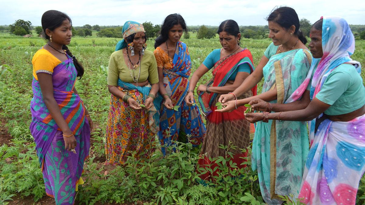 In Gruppen berät SSP Kleinbäuerinnen über nachhaltige, vielfältige und lokal angepasste Landwirtschaft, die mit eigenen Mitteln auskommt.