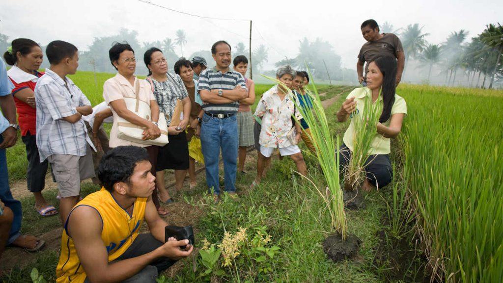 Erfolgsstory Masipag: Kleinbauern erlangen dank der Unterstützung durch die Organisation Masipag wie die Kontrolle über ihr Saatgut, wie zu Beispiel beim Reis.