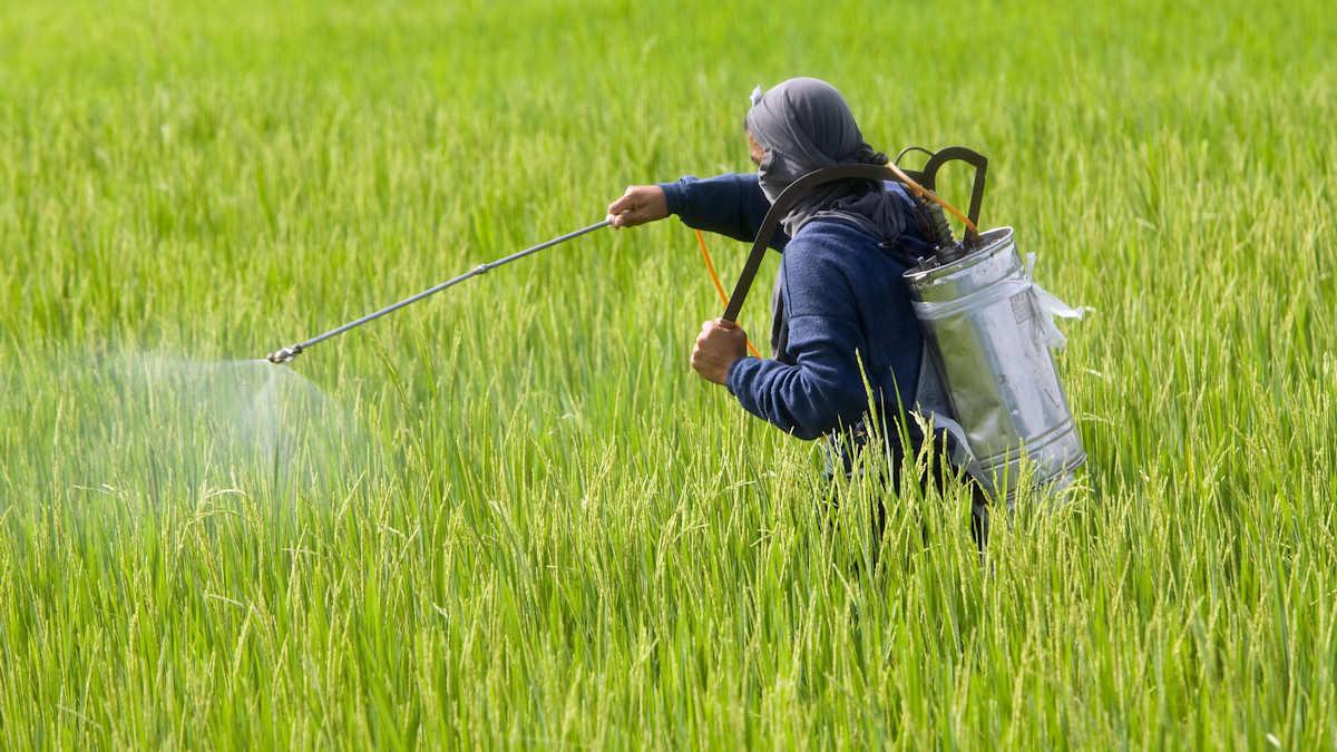 Pestizideinsatz auf den Philippinen © Pohl