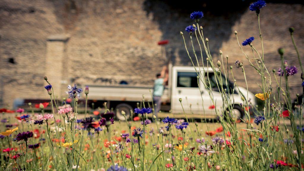 In ganz Andernach sprießt und blüht es: Ein Garten für jedermann, ohne Zäune, inmitten der Stadt. Erst waren die Behörden kritisch, jetzt sind sie begeistert. © David Klammer