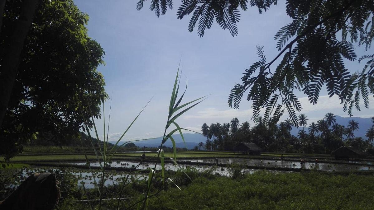 Hier seht ihr die zum Teil schon bepflanzten Reisfelder. Die Landschaft ist einfach so traumhaft schön!