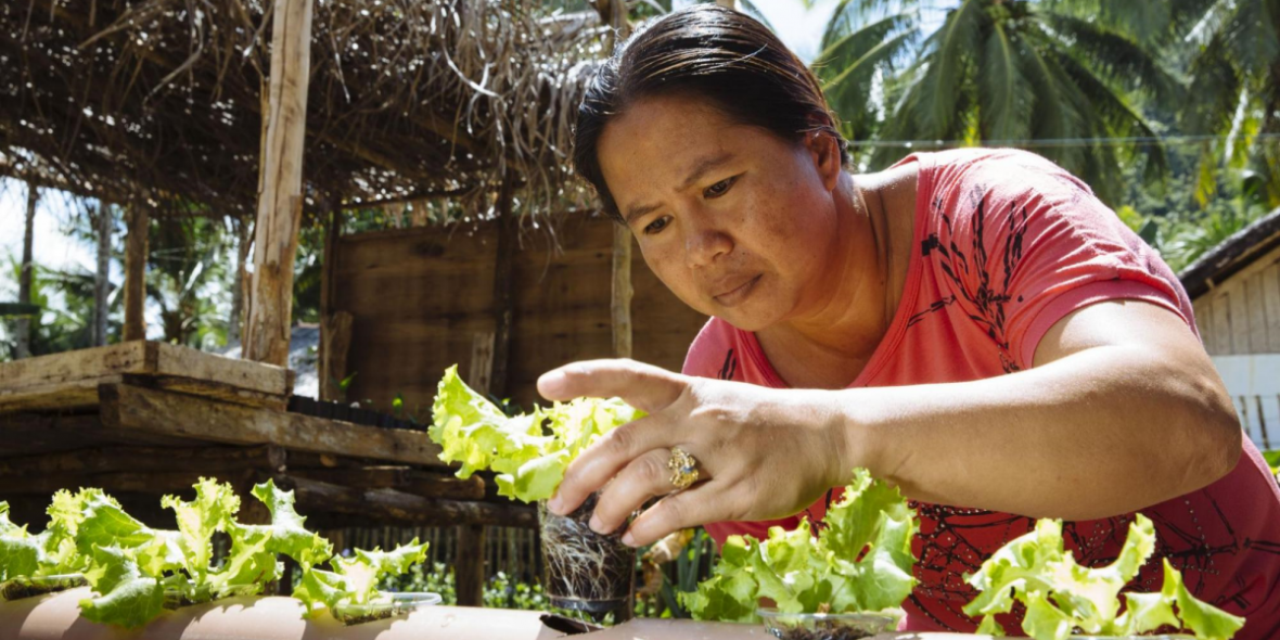 alat in Hydrokultur ziehen: ein Pilotprojektdes Misereor-Partners SIKAT auf der Insel Siargao, Philippinen, ermöglicht Fischerfamilien Selbstversorgung. © Hartmut Schwarzbach | MISEREOR