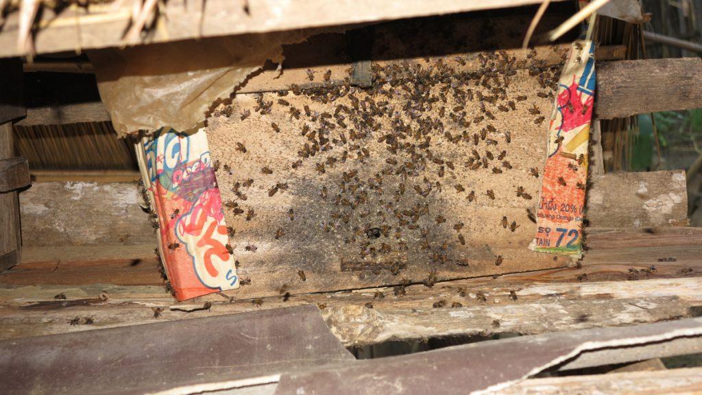Bauern in Laos konnten den Ertrag ihrer Ernte Dank Bienenhaltung um bis zu 40 Prozent steigern © Rupp/MISEREOR