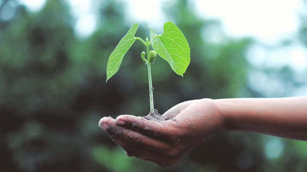 """Ein Setzling als Symbol für unsere Erde als """"gemeinsamer Garten"""": Wie können wir diesen bewirtschaften, so dass alle gut davon leben können?"""