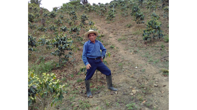 Ein Kaffeebauer steht zwischen Kaffeepflanzen