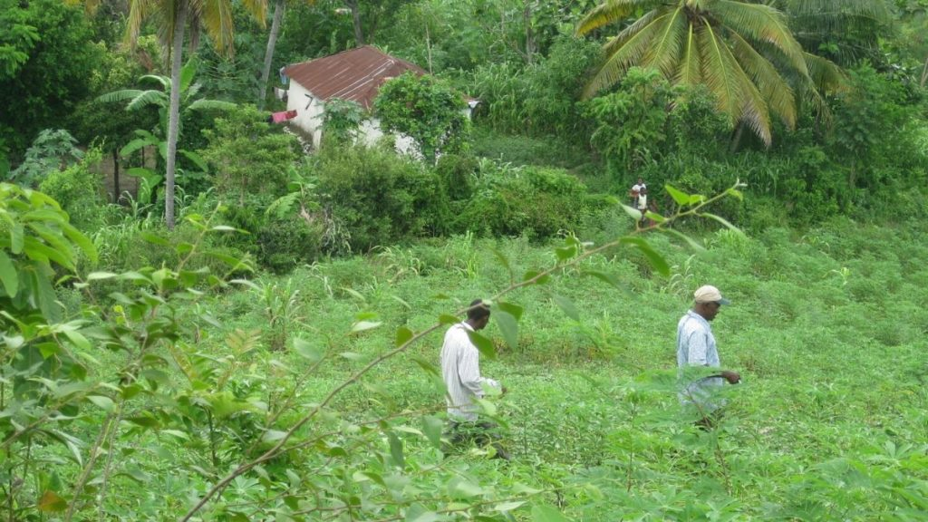 Zwei Männer gehen durch einen Garten