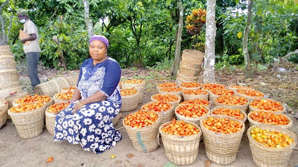 Tomatenhändlerin in Nigeria
