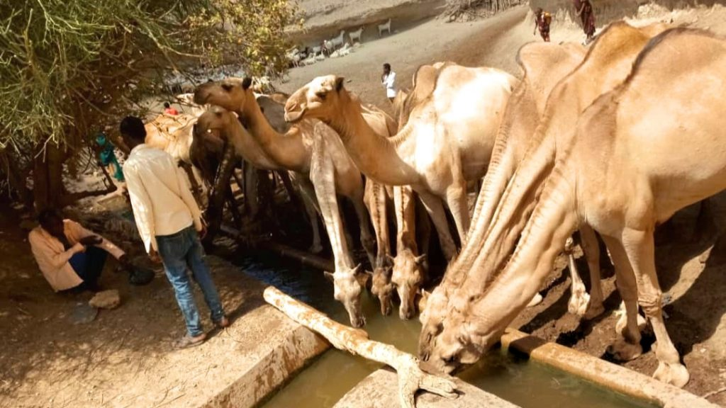 Pastoralismus Äthiopien Kamelherde Trockenheit