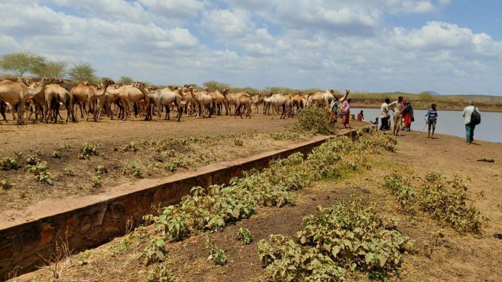 Pastoralismus Äthiopien Kamelherde