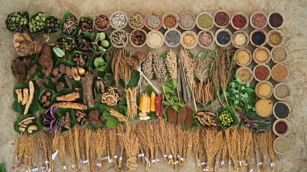 Ernährungsvielfalt bei den Kondh in Indien