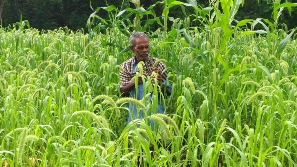 Permakultur und nachhaltige Landwirtschaft der Kondh
