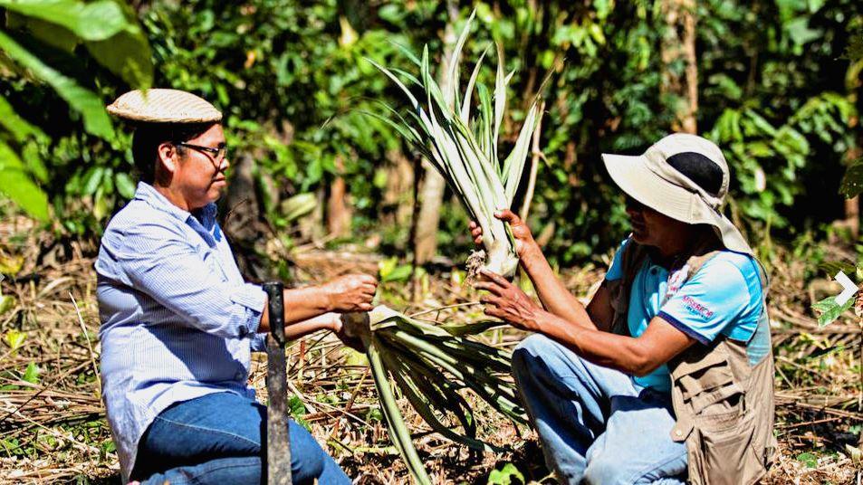 Bolivien Forstwirtschaft