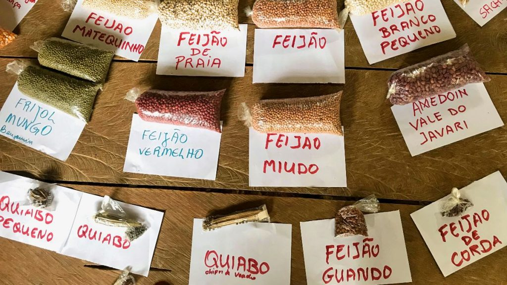 Saatgut Dreiländereck Kolumbien-Brasilien-Peru
