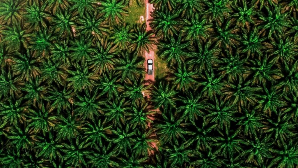 Palmöl Plantagen Malaysia