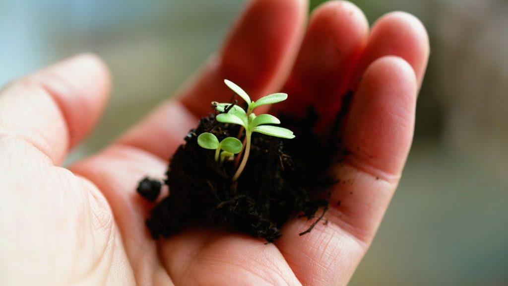 Setzling Kinderhand Schöpfung bewahren Große Transformation