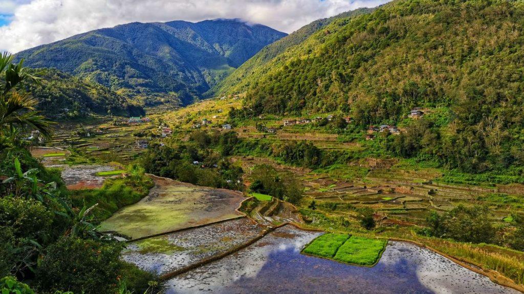 Reisanbau Philippinen